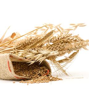 逆流性食道炎 case 06 |逆流性食道炎の原因は小麦粉アレルギー!?