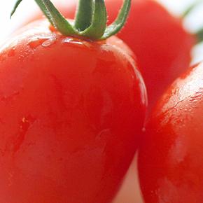 リコピンがガンや動脈硬化を予防 「トマト」