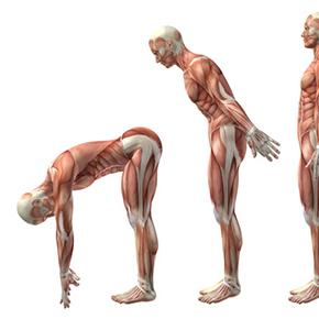 背骨と内臓の関係|人間が前屈している絵